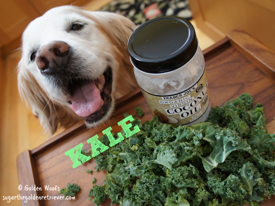 kale_coconutoil_dogs
